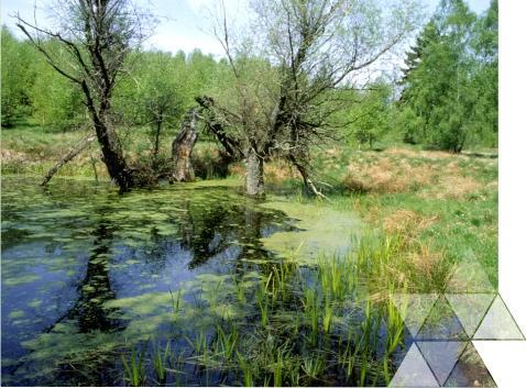 """Konferencja szkoleniowa """"Ochrona krajobrazu – obowiązek czyszansa nazrównoważony rozwój"""" 5 września 2016 r."""